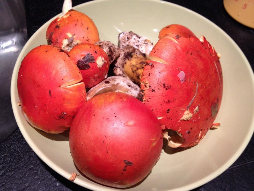 Ovuli mushrooms from Tuscany