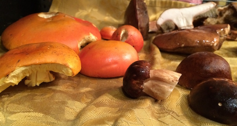 Porcini and Ovuli from Tuscany