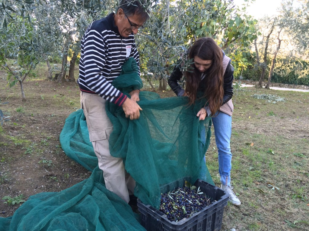 Gennaro and Christina collecting olives