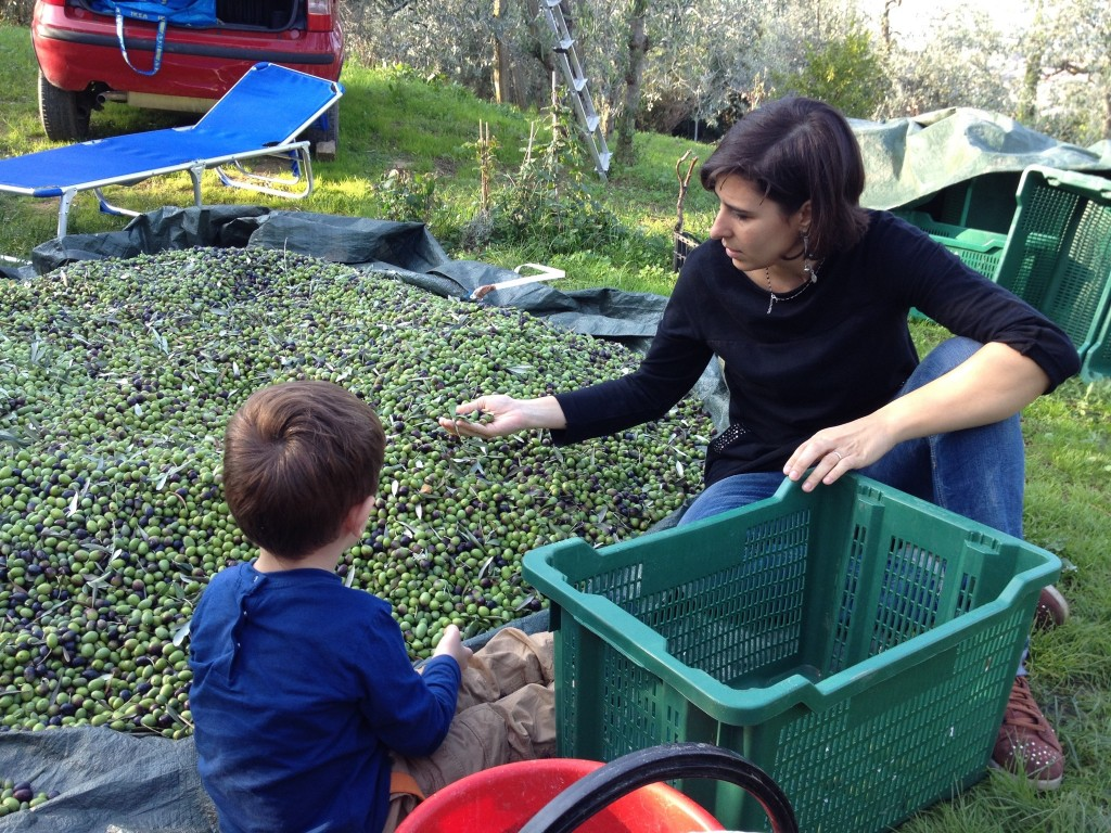 Marica and Michelino selecting the olives