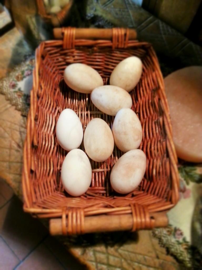 Goose eggs still warm