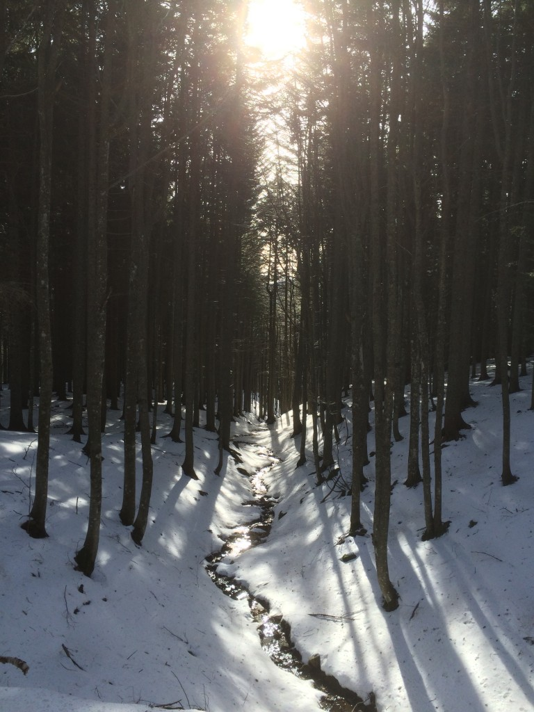 Snow shoeing trail in Abetone