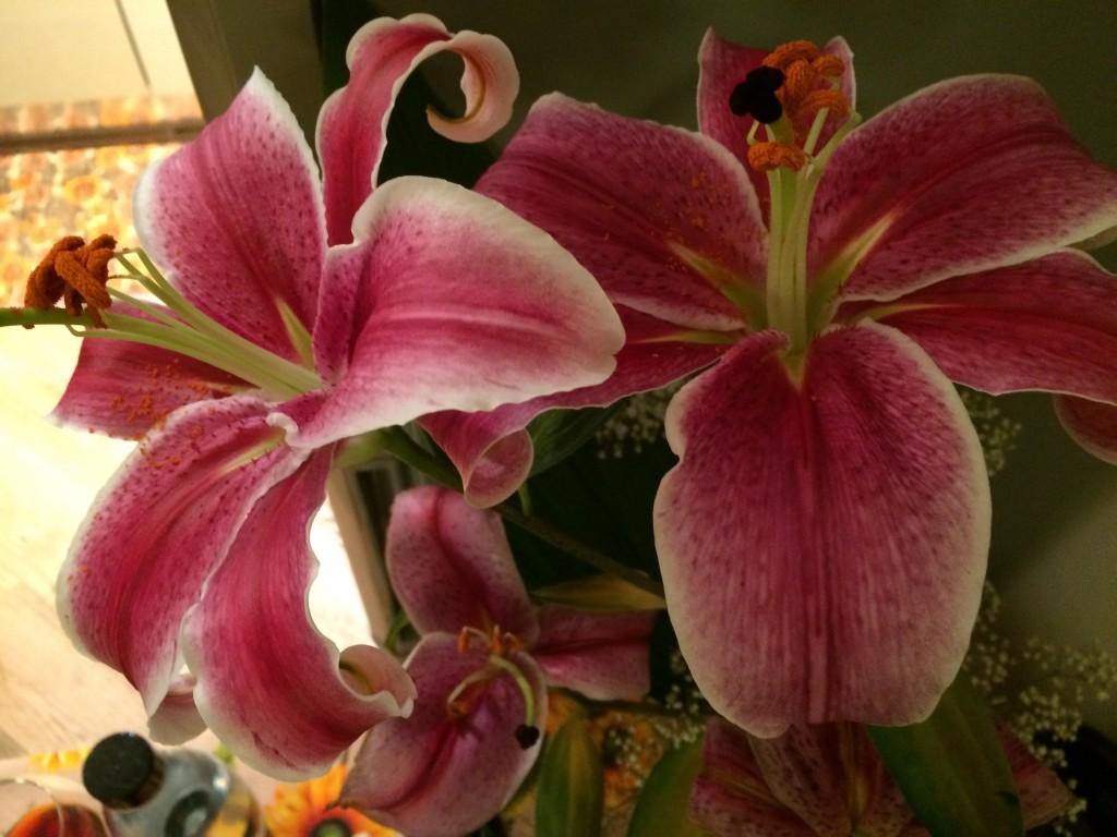 Lilia flowers