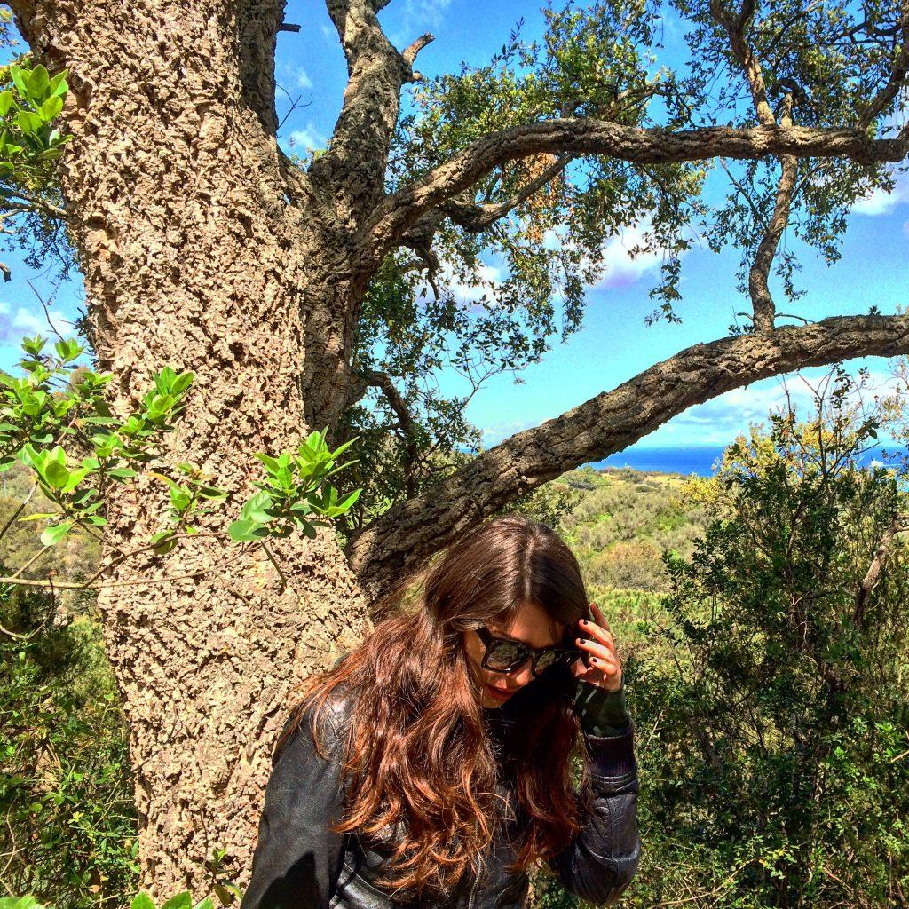 Cork tree in Elba island