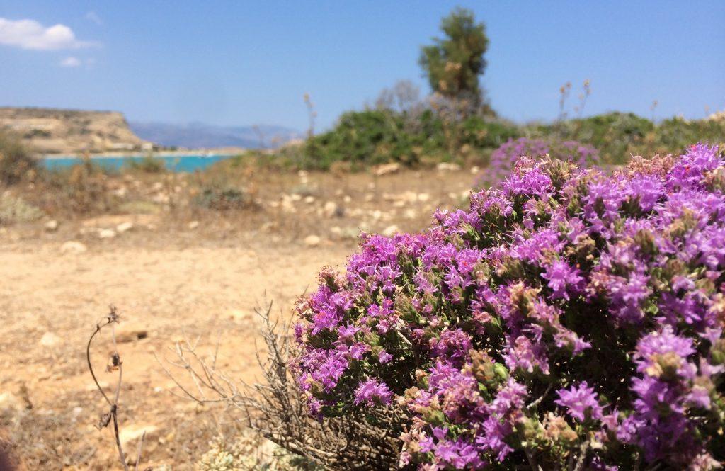 purple flowers and rocks at Finikas Koufonisia
