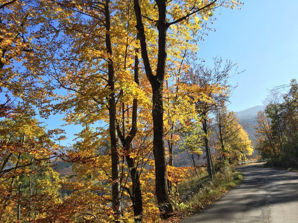Roads of abetone