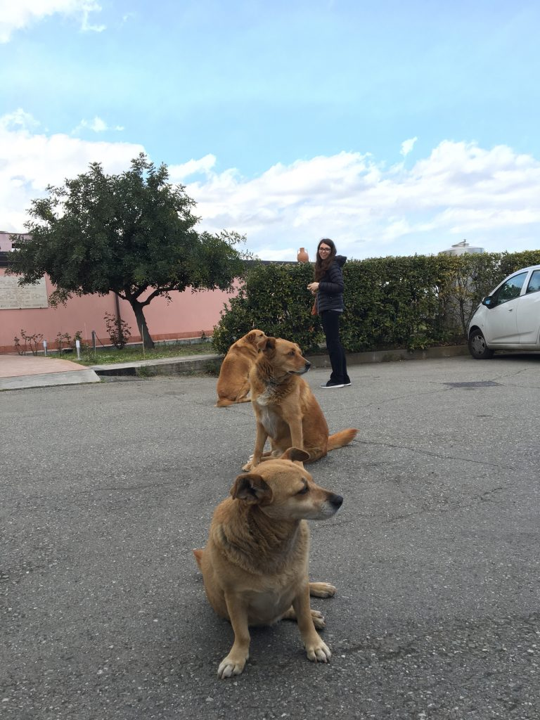 Sicilian bodyguards