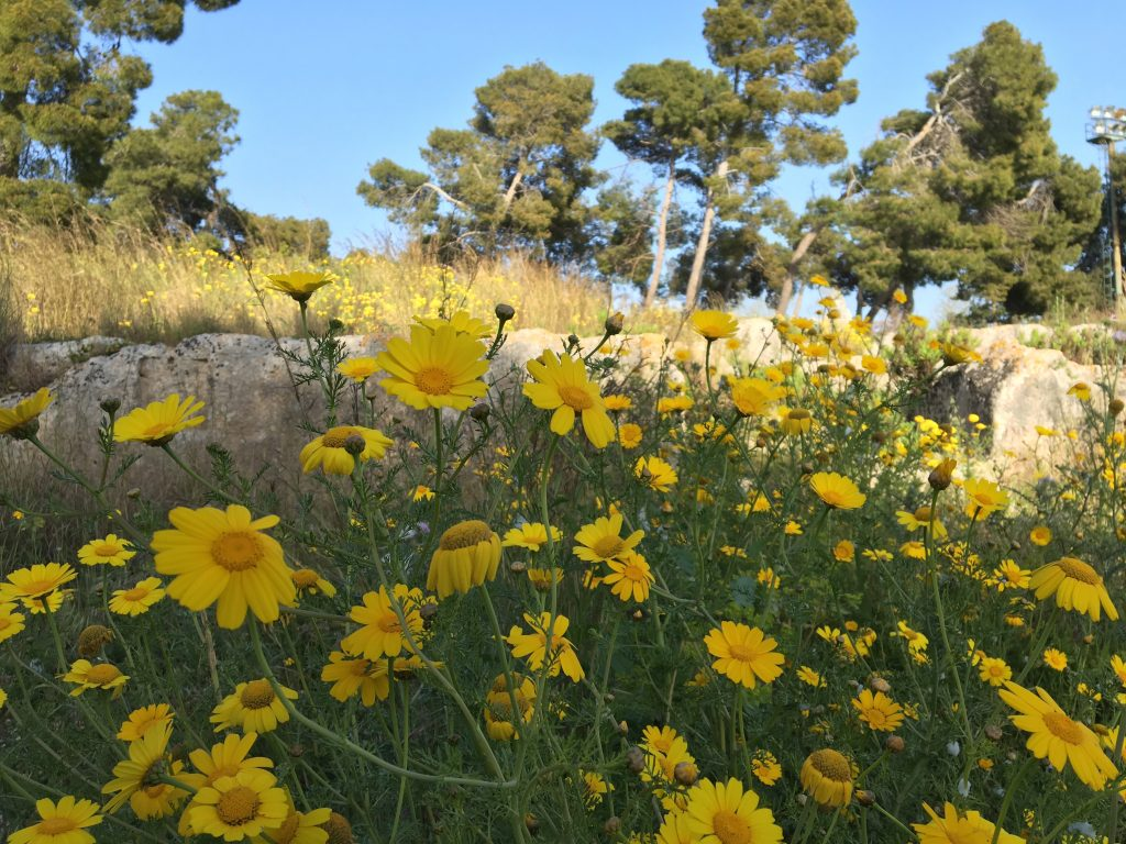Spring yellow flowers in sicily